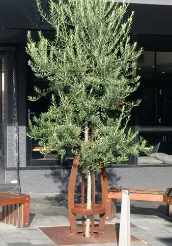 tree with stratacell