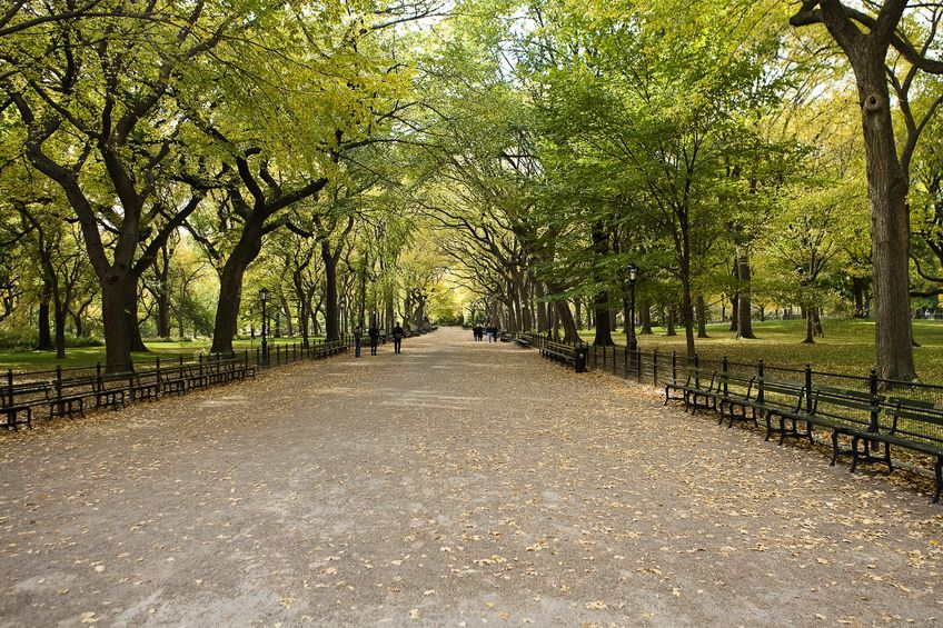 The Human Dimensions of Urban Forestry