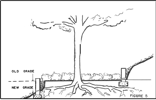 Creating a Tree Well