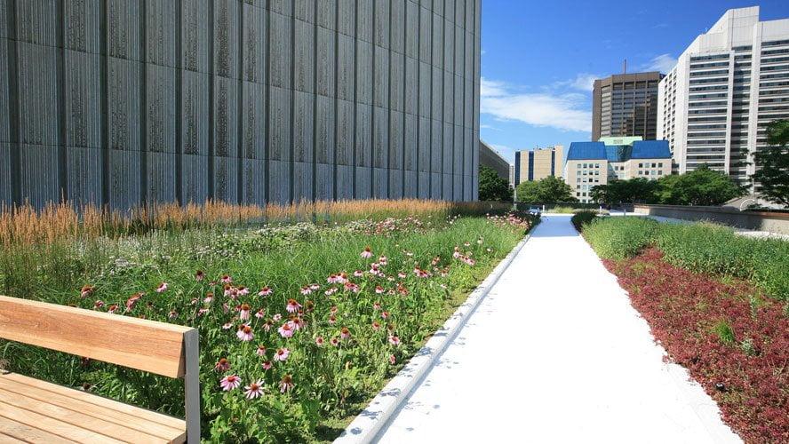 toronto city hall podium green roof