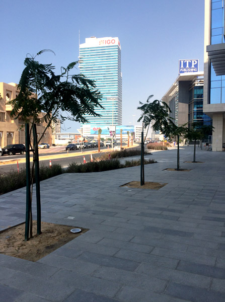 trees planted using stratavault