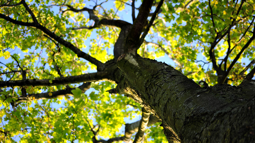 measuring health of trees