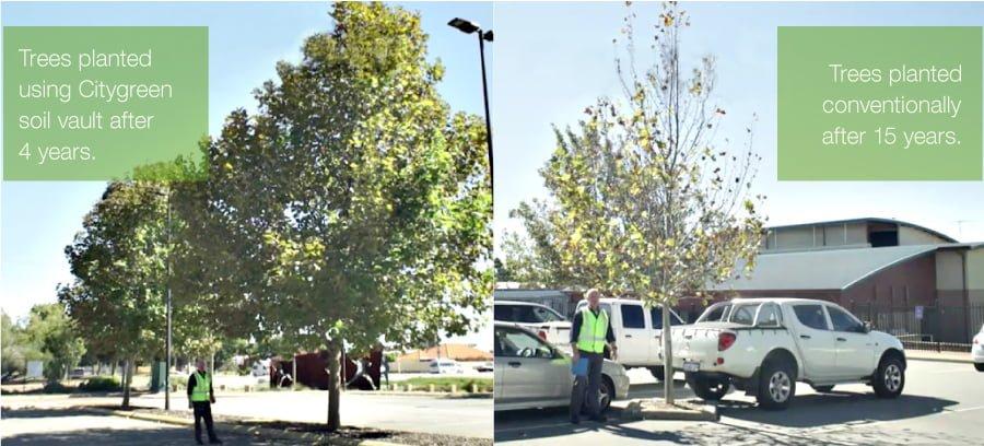 Tree comparison City of Belmont Project